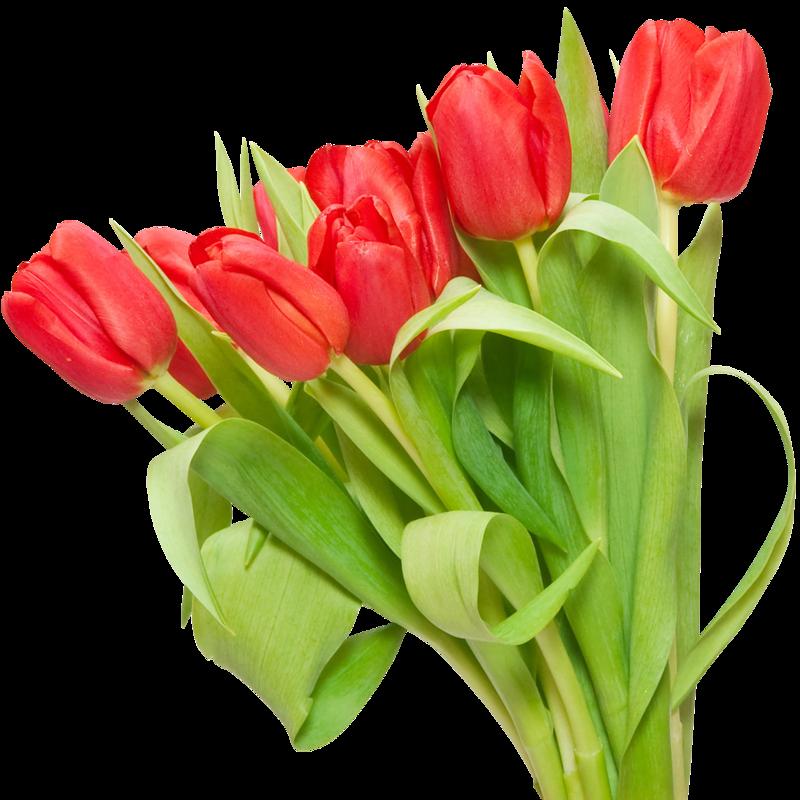 Букет из 75 красных тюльпанов